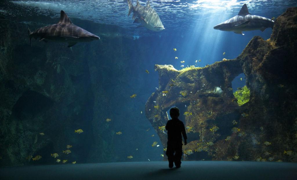 Aquarium de La Rochelle - Client : Osram